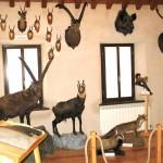 Museo civico alpino