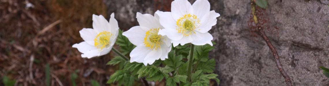 Flora - profilo